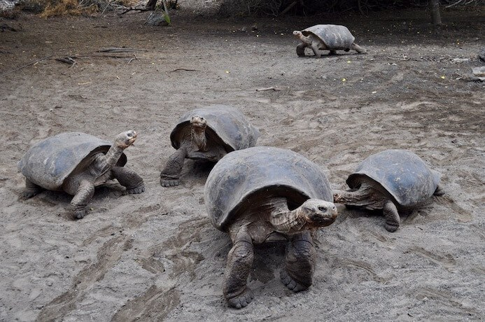 Galapagos Islands travel itinerary dream holiday destinations giant tortoise
