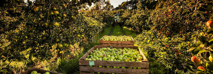 The annual Armagh Food and Cider Festival is a very healthy celebration taking place Thursday through to Sunday the 19th to 22nd of September 2019.